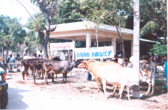 Show / Rally - Cattle 1