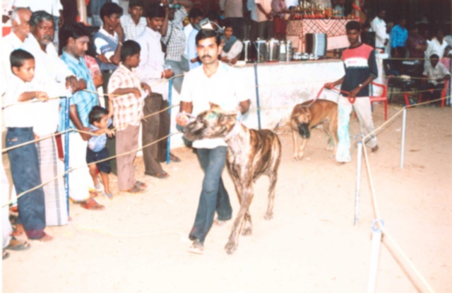 Image of Show / Rally - Dogs 1