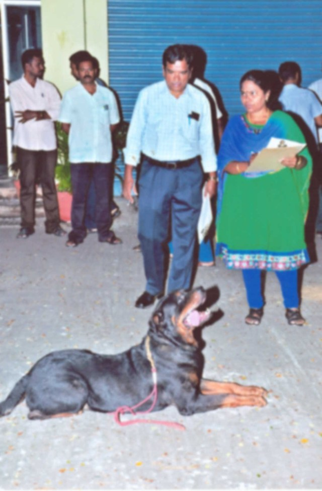 Image of Dog Show Obedience Test
