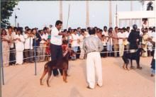 Image of Shows / Rallies - Dogs 3