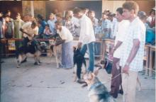 Image of Shows / Rallies - Dogs 4