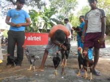 Image of Shows / Rallies - Poultry 2